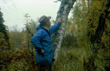 Joe Redington Sr. pointing to 'blazes' on tree along the Iditarod Trail.