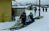 Dog musher stands on the runners of a dog sled in motion during the 1995 Commemorative Serum...