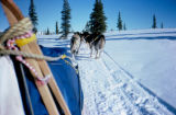 Dog team on trail, from sled perspective.
