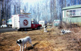 Cora Hoffman's trailer with sled dogs out front.