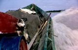 Sled dog sits in a motor boat in motion, with water splashing.