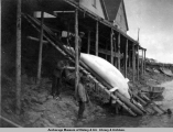 Beluga being hauled up at old Alaska Com[mercia]l B[ui]ld[in]g, Beluga River, 1919.