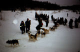 Dog handlers hold the gangline of a dog team ready to start the Knik 120.