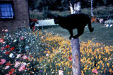 Black cat stands on a post in a flower garden.