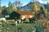 Log cabin in autumn with horses in front yard.
