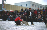 Musher wearing bib 3 stands next to his dog team.