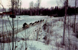 Dog team travels up a hill, and musher runs behind dog sled, during race.