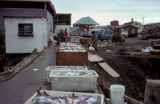 Fish packed in ice in containers outside fish plant.