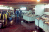 Interior of fish plant in Emmonak.
