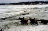 Dog team crossing ice.