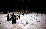 Dog teams on trail that leads in birch forest.