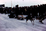 Dog team departs starting line on the 1976 Iditarod Trail Sled Dog Race.