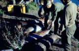 Army helping Joe Redington Sr. with seals.