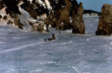 Duane 'Dewey' Halverson and dog team travel along the coast of the Bering Sea between Koyuk and...