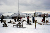 Dog sled race on Park Strip in Anchorage.