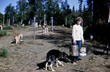 Kathy Chesnut feeding Joe Redington Sr.'s sled dogs.