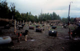 Joe Redington Sr.'s dog lot in Knik with Husky Haven building on far right.