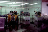 People working in fish processing plant.