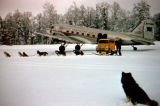 Joe Redington Sr.'s dog team meets Pacific Northern Airlines plane for mail run.