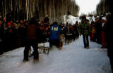 Musher wearing bib 51 and dog team on trail in Iditarod Trail Sled Dog Race.