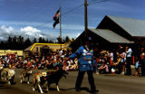 Joe Redington Sr. leads dog team in parade on Wasilla's Main Street.