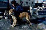 Man kneels next to sled dog with dog truck in background.