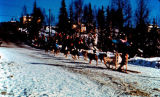 Dog team mushing up Cordova Street in Anchorage during Fur Rendezvous sprint race.