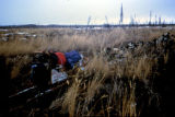 Joe Redington Sr.'s dog sled and team resting among the tall grass on the Iditarod Trail.