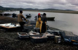 Fish processing on shoreline.