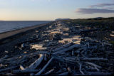 Piles of driftwood on Unalakleet beach.