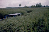Joe Redington Sr.'s boat among high grass.