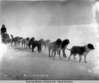 One of Nome['s] fast dog teams.