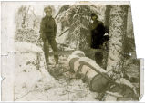 Prospectors fell a big spruce for firewood.