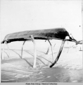 Oomiak on whale rib frame, Point Hope, 3/1942.
