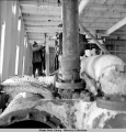 Eskimos hang whale meat to dry in the engine room of old abandoned wrecks, St. Michael, Alaska,...