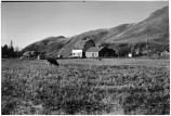 Matanuska Valley farm, October 1943.
