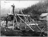 Whipsawing lumber, May 1910.