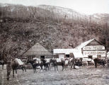 Yaney-Maden & Co. Saloon & Lodging; The Red Onion, ca. 1898.