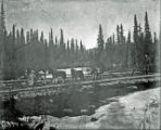 [Man with sled and dogs crossing bridge.]