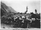 Burro Pack Train, Bennett, ca. 1898.