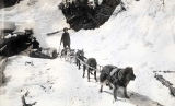 Miners and dog team on trail to the Yukon, 1898.