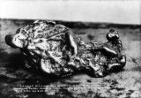 Largest gold nugget found in Copper River country, Aug. 15, 1907.