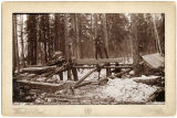 Whip-sawing lumber for boat-building, Yukon Valley, c. 1897