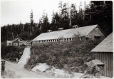 Dairy, Wards Cove Section, Tongass Hwy., 9/24/29.