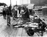 Dock scene, Golden North Salmon Derby, 1964.