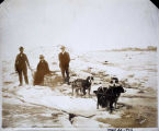 W. W. Sale's dog team on Bering Sea, Nome, Alaska, May 20th 1906.