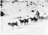 Alaska sled dog team.