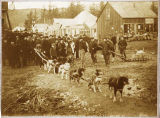 Dog teams at Skagway from Dawson City, Dec. 23, 1897