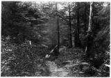 A view of the trail to the mine, Sumdum, 1896.