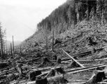 Felled timber at Helm Bay near Ketchikan,Tongass National Forest,  Alaska, 1930.